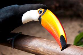 Бразилия, парк птиц в Фоз-до-Игуасу